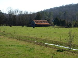 "A Cattle Ranch in Decalb County (pronounced ""Da-cab"")"