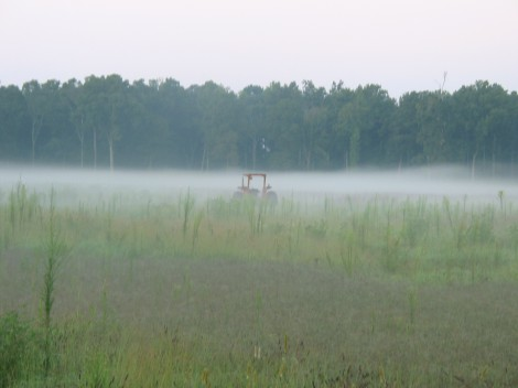 Tractor in the Mist