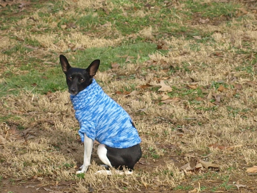 Hated his sweater even when the ground was frozen!