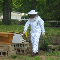 Erratic Bee Keeping:  what not to do