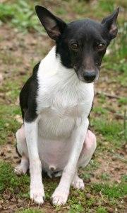 A-handsome-little-dog