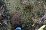 Along the trail I found a very large paw print,