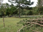Fence is damaged and the pine has been topped.  It just missed the new plantings.