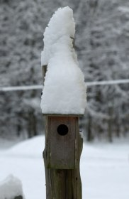 Bird house blizzard!