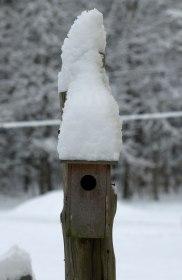 Bird house blizzard!