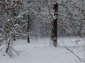 This morning in the woods where we live.