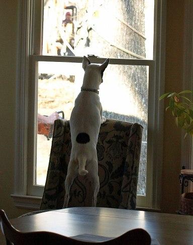 cheif-doggy-inspector